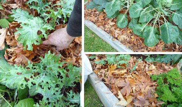 spread mulching